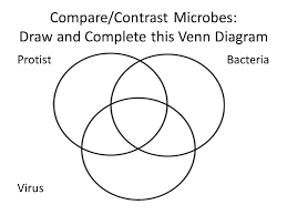 Bacteria And Protist Venn Diagram 7c45 World Of Microbes Kingdoms Scientists Classify Living