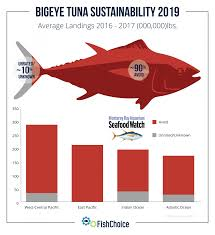Tuna Fish Size Chart Bigeye Tuna Fishchoice