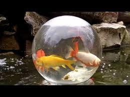 koi pond lighting ideas. fish bowl on your pond cool idea koi lighting ideas