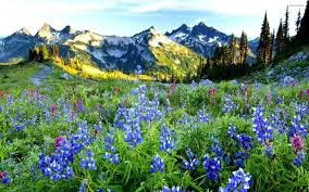Image result for mountain flowers