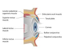 Loss Of Vision Settlement Value Of Eye Loss And Blindness
