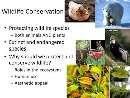 short essay on wildlife protection land water air plants animals solid wastes and other things that are surrounding us constitute our environment short essay on wildlife protection