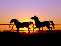 horses running in the sunset. Plain Horses Two Horses Running At Sunset Inside In The