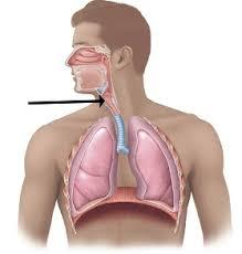 Симптомы и лечение туберкулеза гортани Расположение очага заболевания