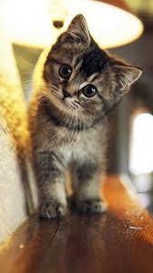 Cute Stare At Cat Animal iPhone 6 ...