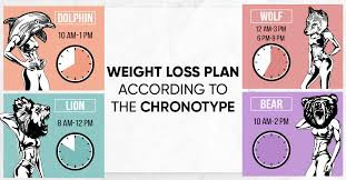 the 4 chronotypes and weight loss