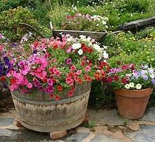 container gardening for beginners. Plant Container Gardening Ideas For Beginners