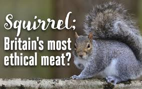 Image result for should we eat meat?