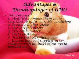 genetically modified food essay thesis modified foods essay genetically modified food essay thesis