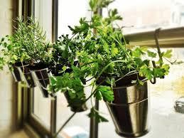 Terrace and Garden: Sunlight Herb Gardens - Herb Garden