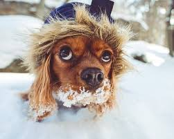Image result for dogs in winter images