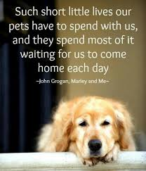 Quotes About Dogs And Friendship Inspiration 48 Best My Best Friend Images On Pinterest Fluffy Pets Adorable