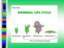 Plant Life Cycle Flow Chart Understanding Plant Life Cycles Ppt Video Online Download