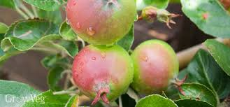 The Best Time To Prune Peach Trees  Home Guides  SF GateCan You Prune Fruit Trees In The Summer