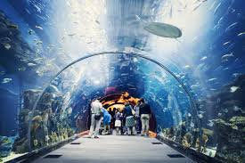 The real underwater world DubaiMallUAE httptravelrivalcom