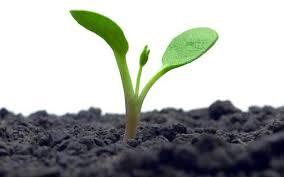 garden seed. USDA Organic, Organic Seeds, Food, Garden Seed I