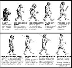 Evolution Of Man Chart A Chart Of All The Evolutionary Pre Man Examples There Is