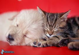 puppies and kittens sleeping. Brilliant Puppies Dog And Cat Sleeping Dog Puppy Kitten Throughout Puppies And Kittens Sleeping G