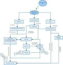 a review on the current status of various hydrothermal technologies full size image