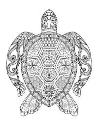 Small Picture Turtle Coloring Pages For Adults zimeonme