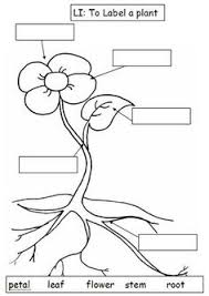 Small Picture Black And White Plant Parts Diagram Sketch Coloring Page The