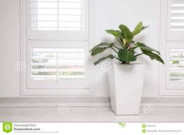 office tree. White Office Wall Window And Green Tree Stock Photo N