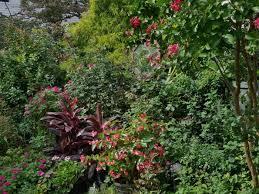 favorite plants in a new jersey garden
