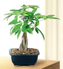 artificial office plants office desk plants money bonsai tree tall office plants ideas tall office plants