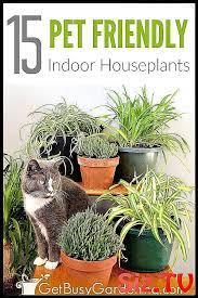 cat plants plants poisonous plants