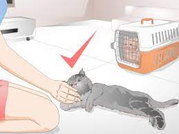 how to get rid of cat spray odor 12