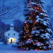 large outdoor tree lights martha stewart lighting never out let there be lights martha stewart lighting outdoor