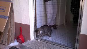 Katzennetze Vom Katzennetz Profi Videoclips Ansehen