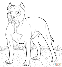 Small Picture Pitbull coloring page Free Printable Coloring Pages