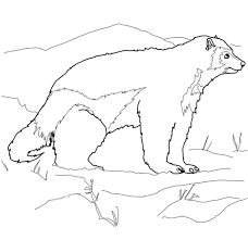 Small Picture Arctic Wolverine coloring page Free Printable Coloring Pages