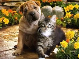 Image result for puppy and kitten together