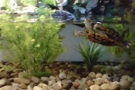 Turtle Tank Decor Decorating Ideas For Turtle Tank How To On A Budget Youtube
