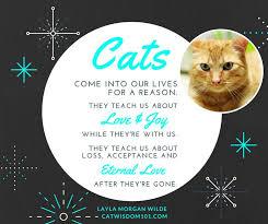 Cat Loss Quotes Magnificent Similiar Cat Loss Quotes Keywords