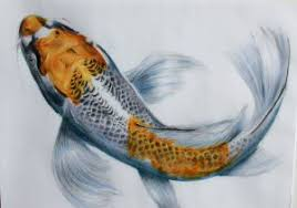 realistic koi fish drawing. Exellent Drawing Koi Fish Drawing Color Realistic At Getdrawings  Free For  Personal Use Throughout R