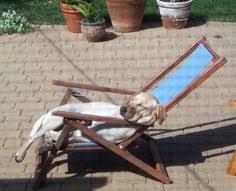Small Picture Backyard Ideas For Dogs Backyard Landscape Design