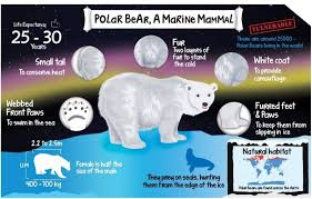 Polar Size Chart Animal Chart For Kids Polar Bear Poster Size A3 11 7