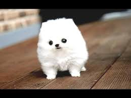 funny puppies and cute puppy videos
