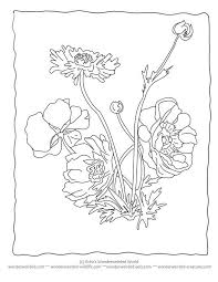 Small Picture 25 best Coloring Pages for Flowers images on Pinterest Coloring