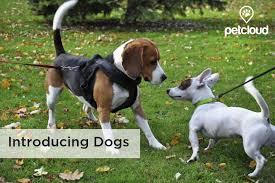 Pet Care Whats New Pet Minder Tips Petcloud