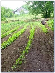 craigslist shreveport farm and garden farm and garden farm and garden popular farm garden craigslist shreveport