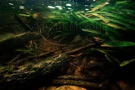 Aquarium Backgrounds Aquarium Backgrounds