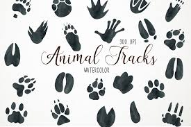 Shop for animal wall decor online at target. Watercolor Animal Tracks Clipart Animal Tracks Clip Art Paw Print Cl By Paulaparaula Thehungryjpeg Com
