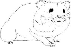 Small Picture Coloring the hamster is seed eating picture