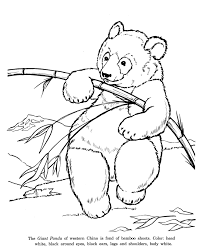 Small Picture Animal Drawings Coloring Pages Giant Panda Bear animal