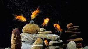 Fish Full Hd Hdtv Fhd 1080p Wallpapers Hd Desktop Backgrounds