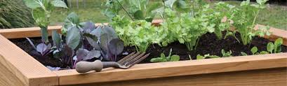 Small Picture Raised Garden Beds NZ Raised Vegetable Garden Beds Gubba